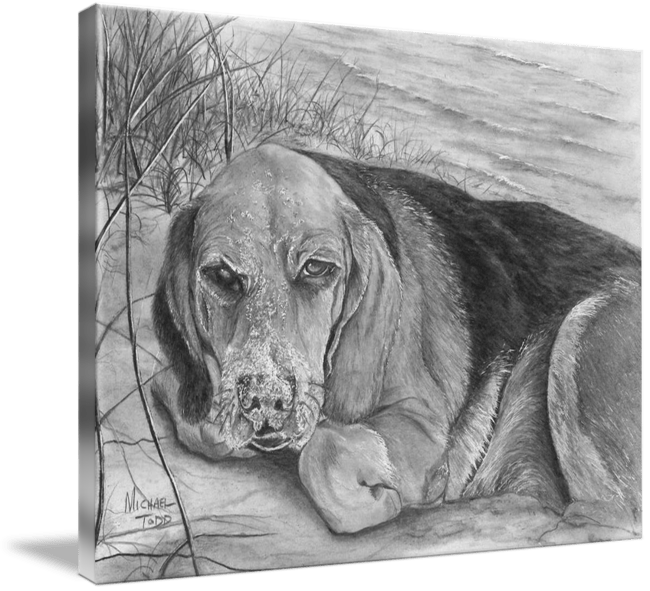 Graphite Drawing of Beagle on the Beach by Michael Todd